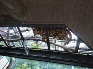 動物園1 (640x480)